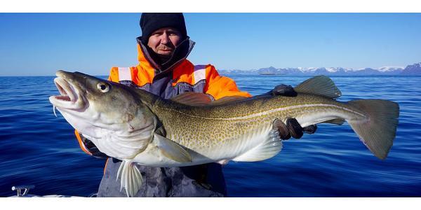 Djuphavsfiske i Nordnorge